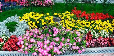 Декоративное цветоводство и садоводство
