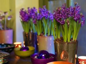 комнатное цветоводство